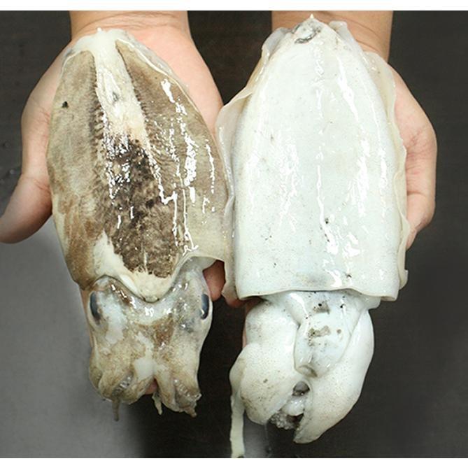 [푸드큐브] 산지직송 서천 갑오징어 1kg(3~5마리)
