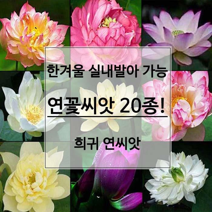 연꽃씨앗 20종 희귀 수생식물 실내에서 키우기 좋은 연꽃 8개
