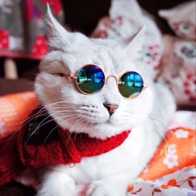 [리은상점] 강아지 고양이 반려동물 선글라스