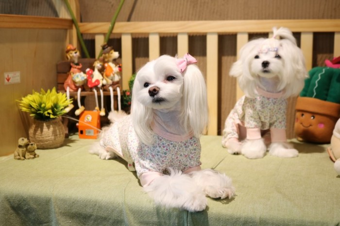 [킹스독]  강아지옷/애견옷/반려견옷/꽃잔디 올인원