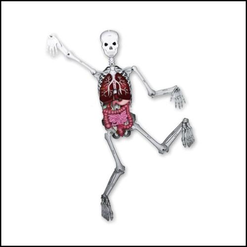 [(주)신세기사이언스] 인체 모형 만들기(1인용)/KSIC-0230