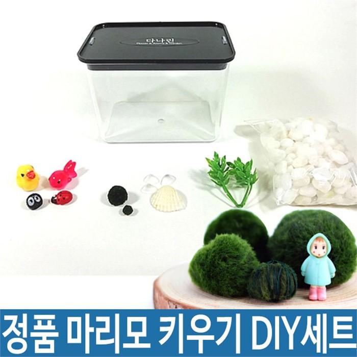 정품 일본 마리모 DIY 세트 1